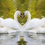 Ten Rare Birds of China