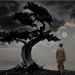 China Carnival #9: Monk, Ninja, Enlightenment